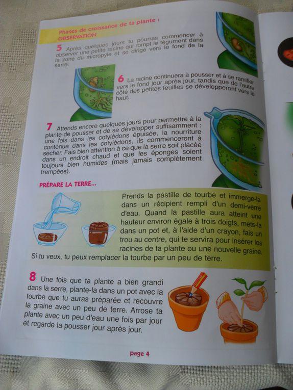 Une fois les graines germées, les enfants les ont plantées dans des petits pots de terre.