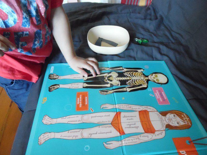 Des puzzles magnétiques sur le squelette, et les organes digestifs (je n'ai pas mis les autres).