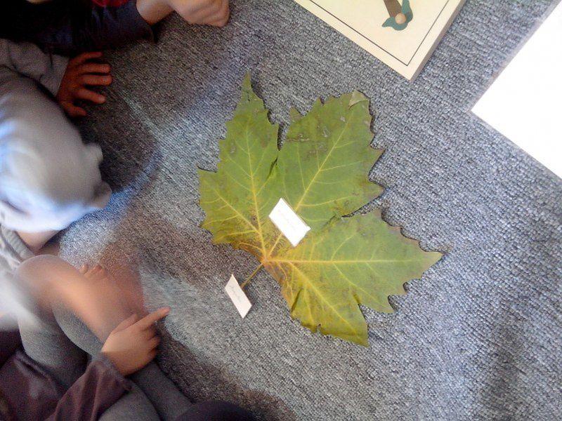 Stage Montessori 7/12 ans, l'automne (4)