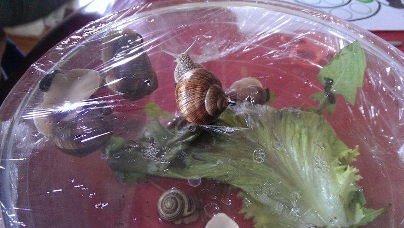 Les escargots.