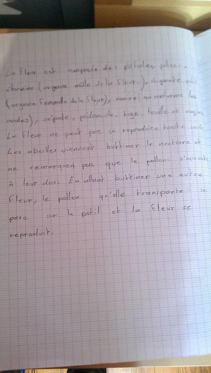 Enfin, j'ai demandé aux enfants d'écrire ce qu'ils ont retenu de la pollinisation sur leur cahier de sciences.