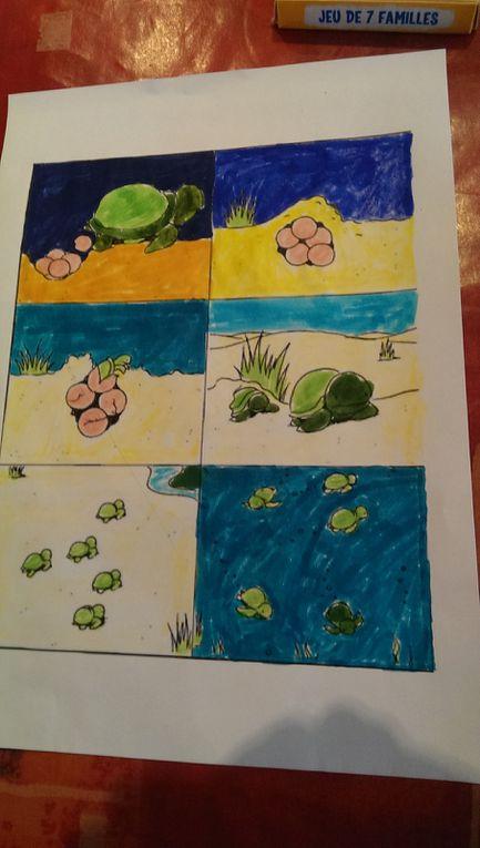 Les tortues (4)