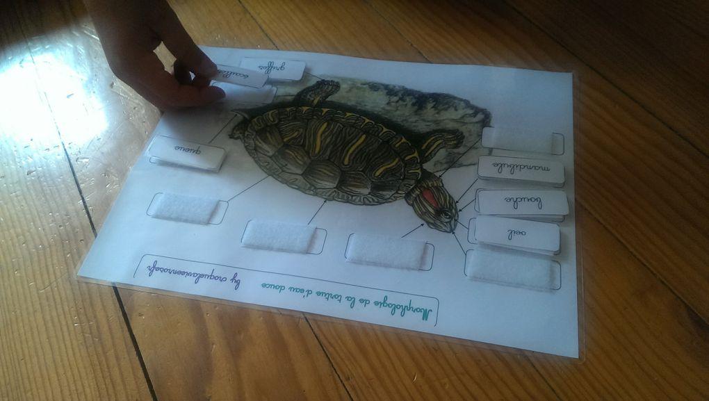 Le lièvre et la tortue (suite)