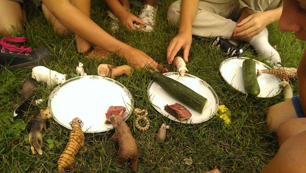 Petite classification animale (suite) : Carnivores, herbivores, omnivores