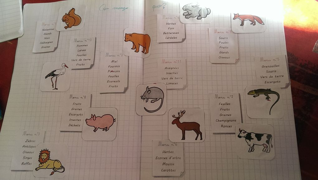 Le menu des animaux