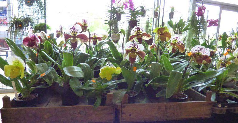 Exposition Internationale d'orchidées à Volgelsheim