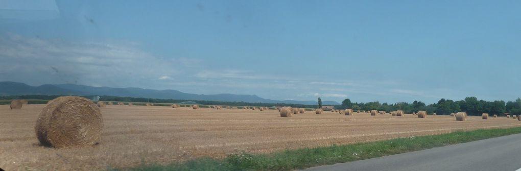 Eté 2017 en Plaine d'Alsace