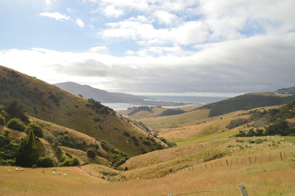 RTSI : De Dunedin au Mont Cook