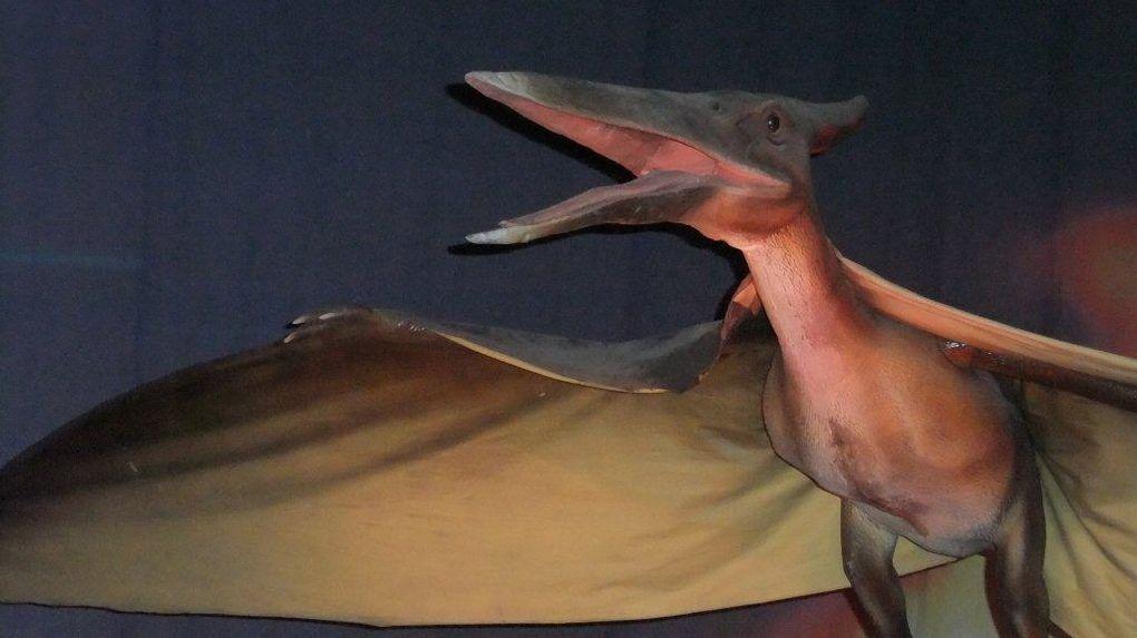 De l'ère des dinosaures à l'ère de glace