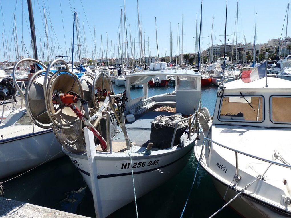 LILY   NI256945 , dans le port d'Antibes