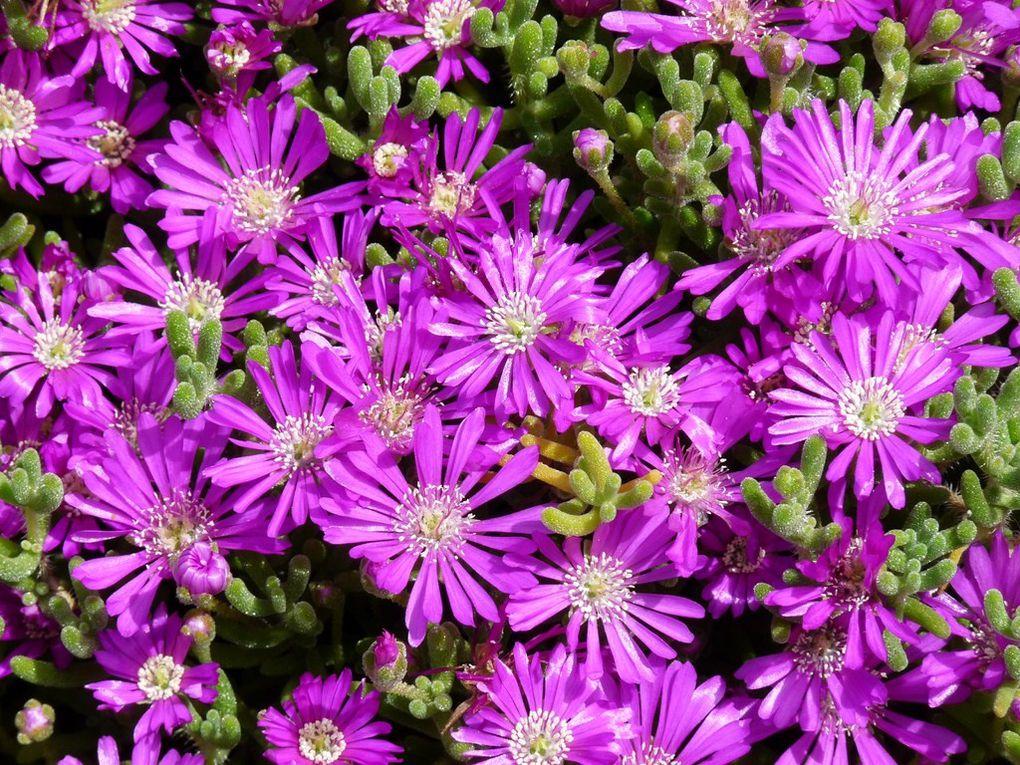 Fleurs 30