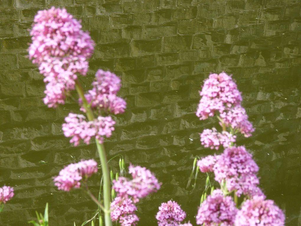 Fleurs 31