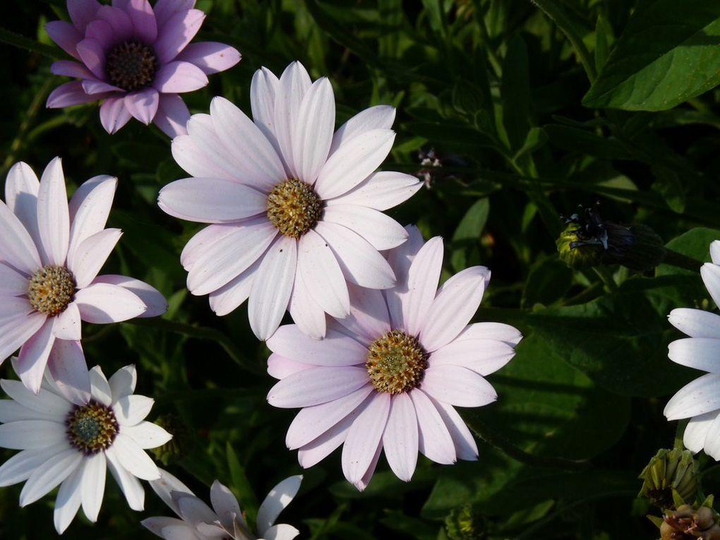 Fleurs 37