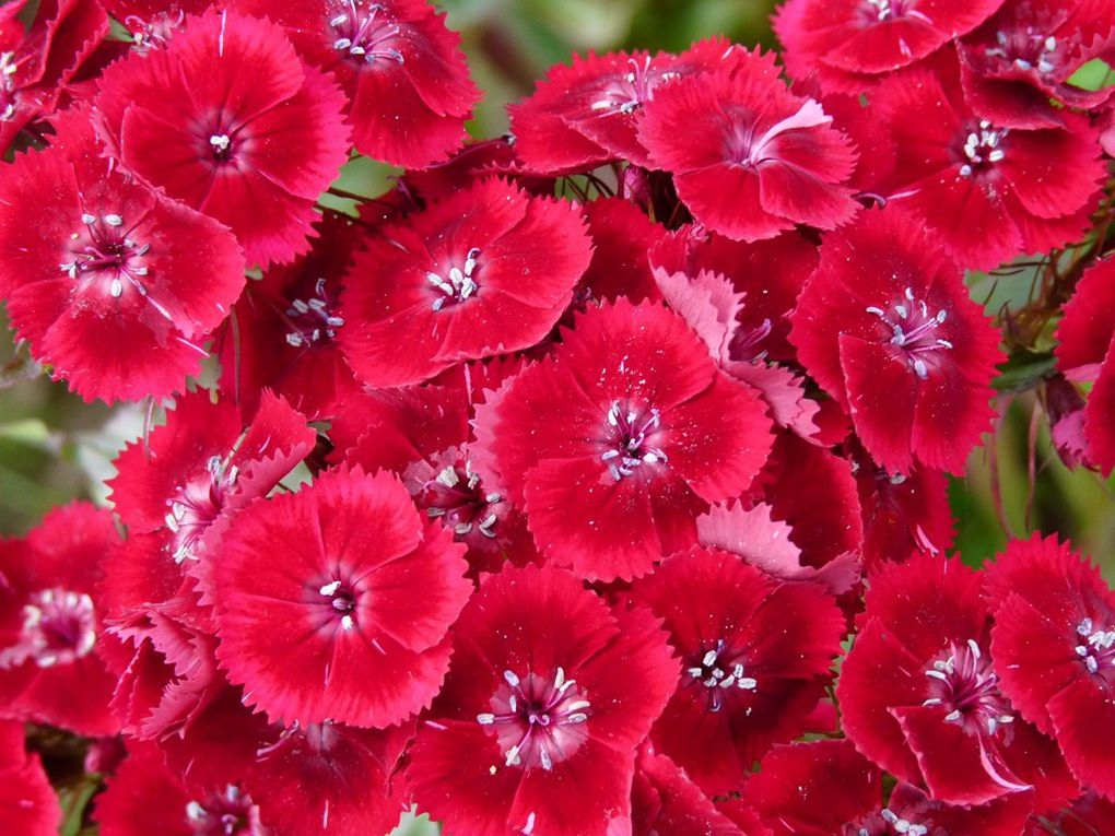 Fleurs 44