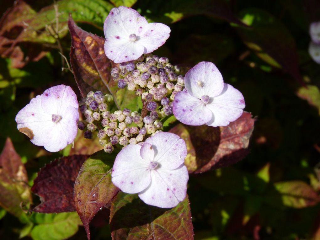 Fleurs 48