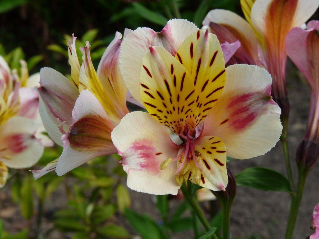 Fleurs 52