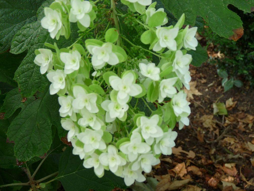 Fleurs 55
