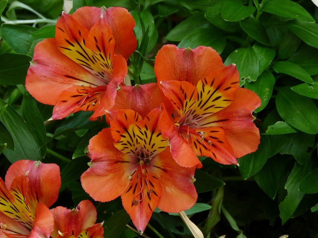 Fleurs 61