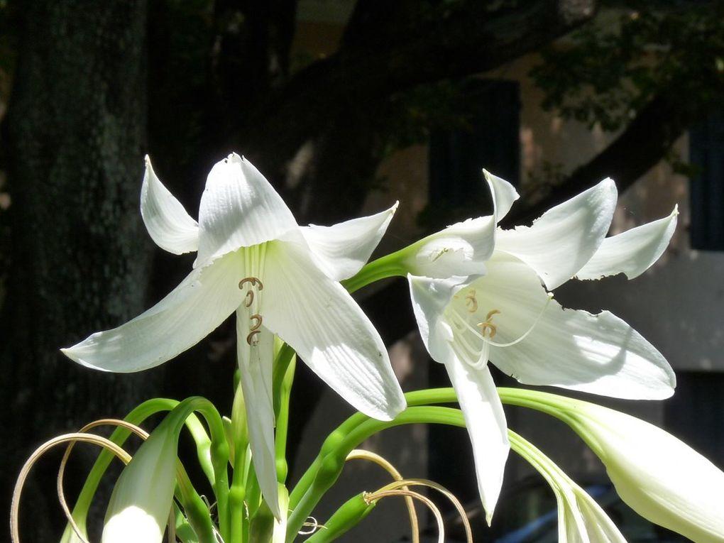 Fleurs 67
