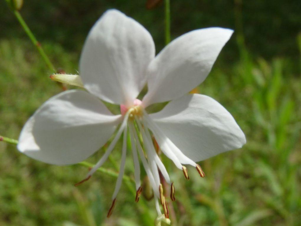 Fleurs 68