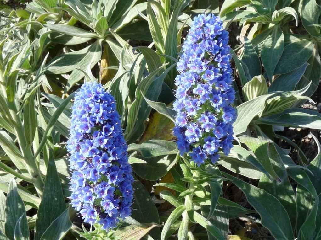 Fleurs 74