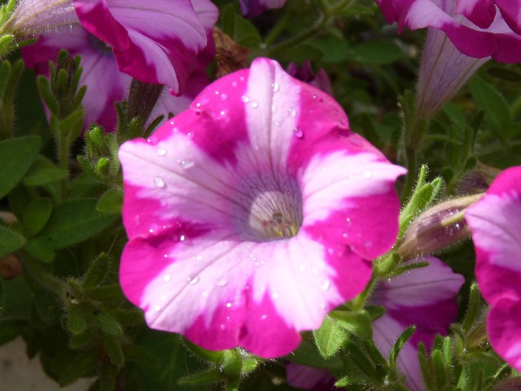 Fleurs 78