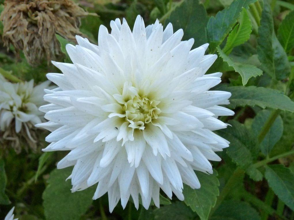 Fleurs 80