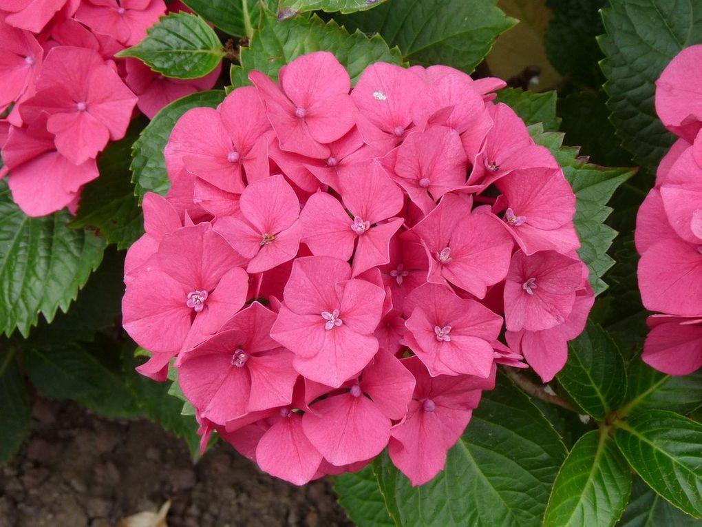 Fleurs 85