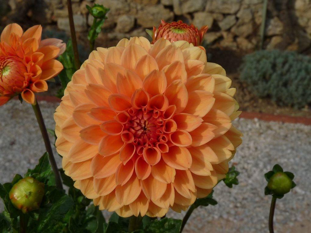 Fleurs 89