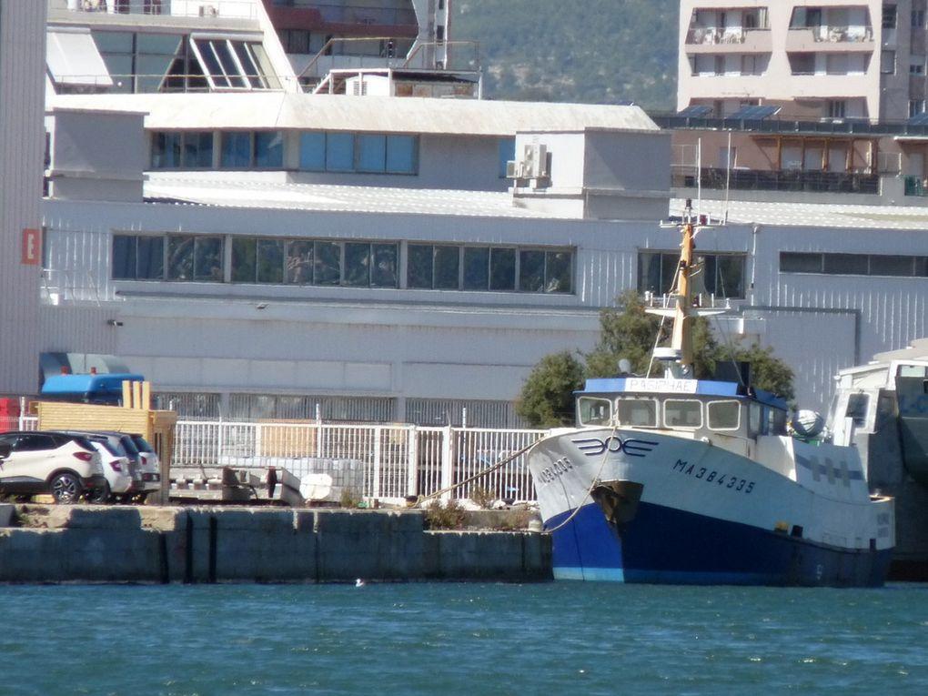 PASIPHAE , navire de support à la plongée
