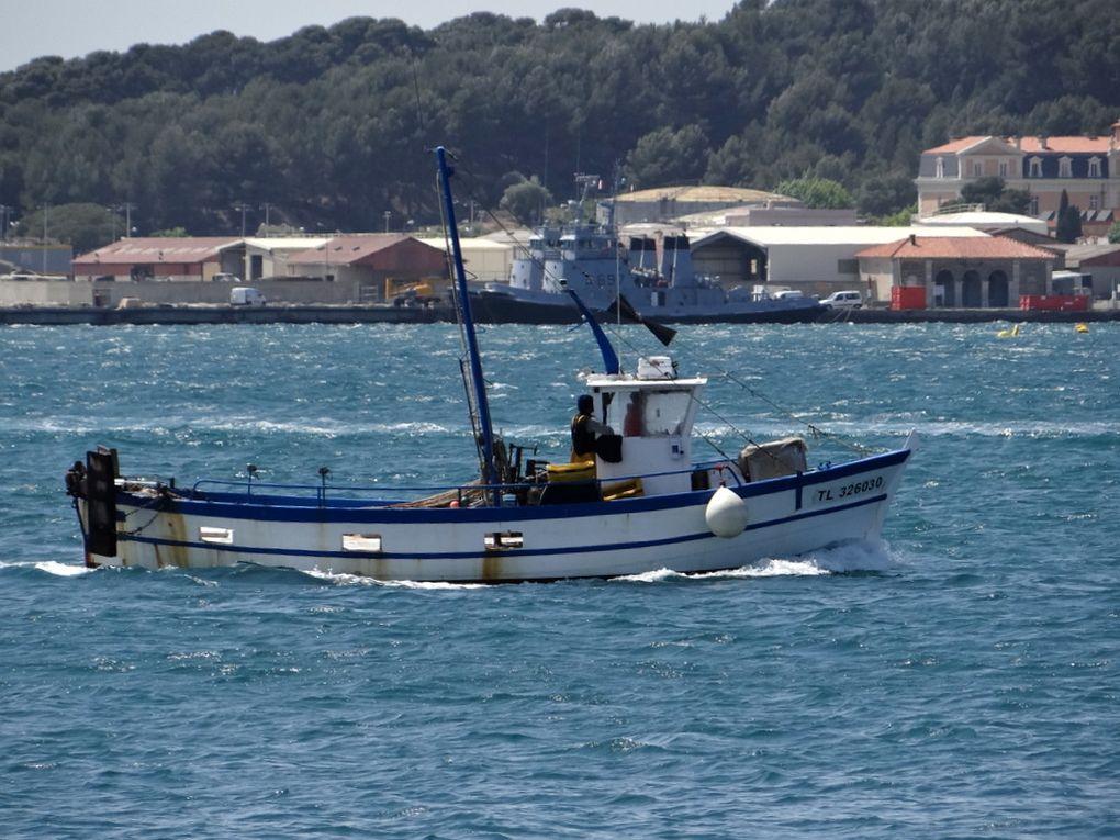 JEFF  , TL 326030 , en petite rade de Toulon