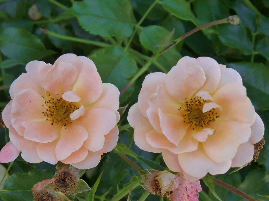 Fleurs 107