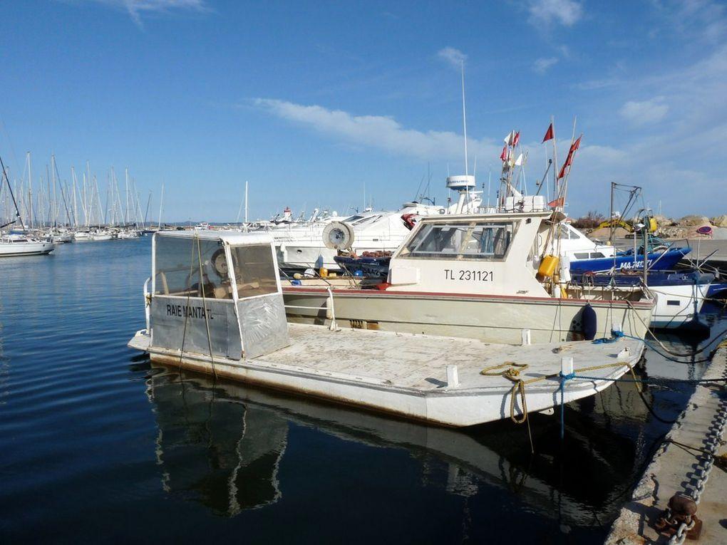RAIE MANTA , dans le port de Hyères