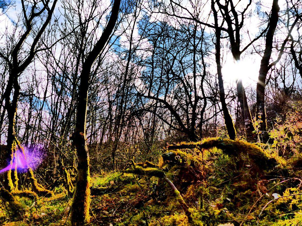 La nature est vraiment belle ! ses couleurs, ses formes, ses lumières whaouououuououououou !