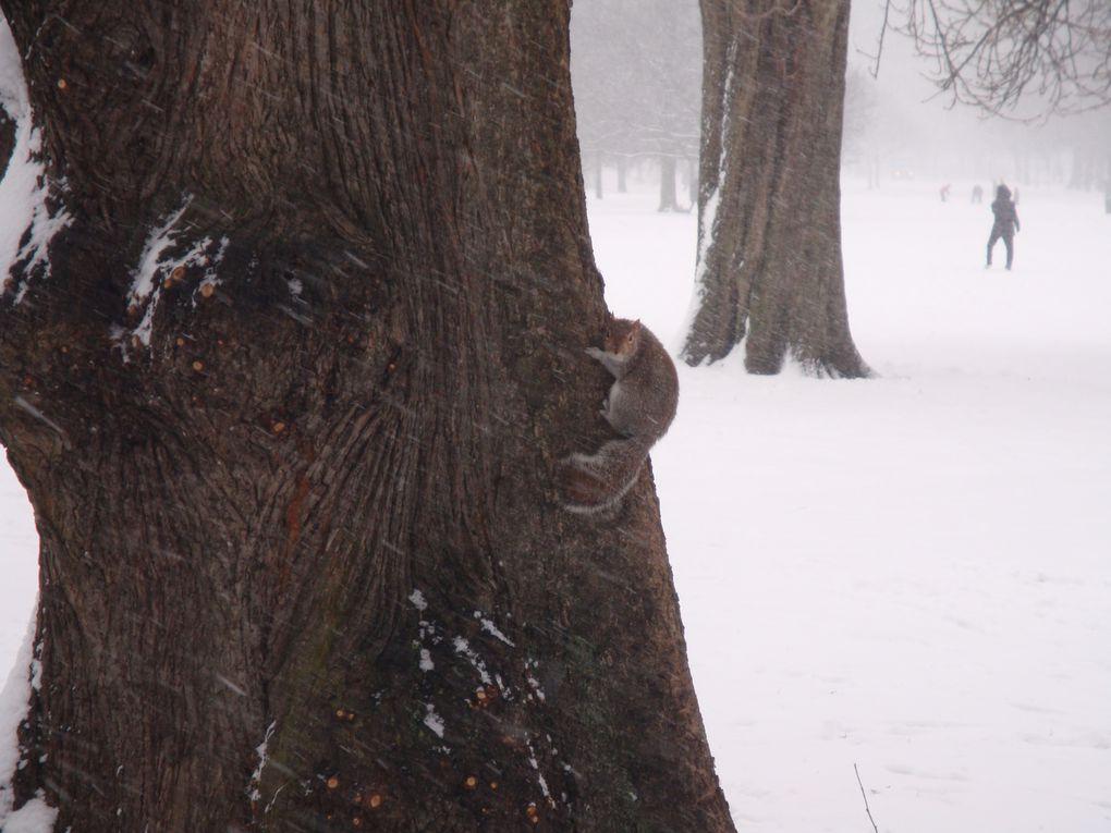 Les sports d'hiver de la faune d'Hyde Park