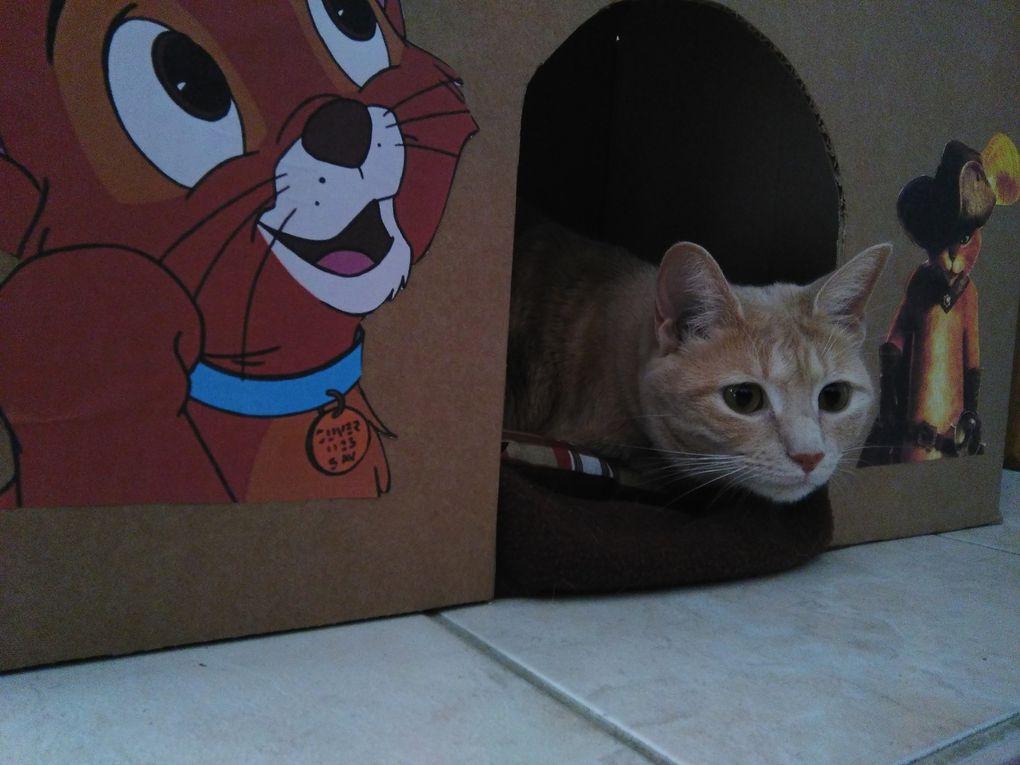 DIY : Fabriquer une maison pour mon chat !