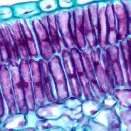 11.1 Les tissus végétaux