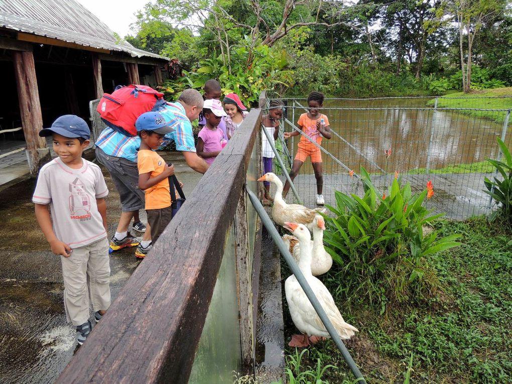 Les CP au zoo de Guyane