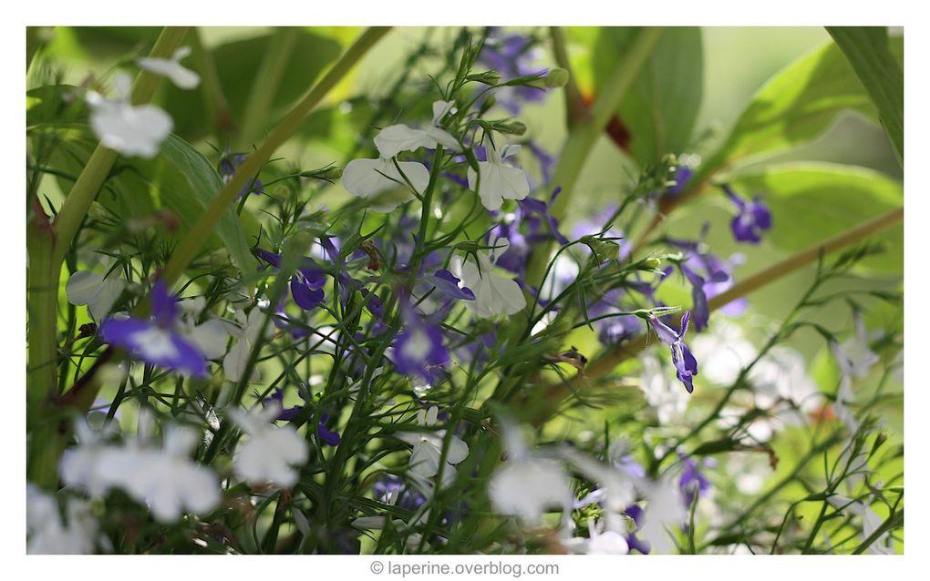 Quelques Fleurs et arbustes présents au jardin (euh….sauf la dernière photo !!!)