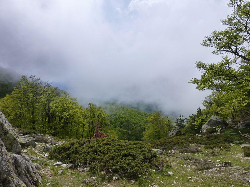On quitte notre refuge d'U Fugone,ancienne toute petite station de ski, sous un beau soleil pour rejoindre d'abord les bergeries d'E Traghjette puis le plateau du Ghjalgone depuis lequel on a une très belle vus sur le vallon du Marmanu. Les nuages arrivent sur les crêtes on on termine notre journée en montant presque dans le brouillard. Le refuge est grand et sa zone d'accueil importante pour les campeurs. D'où nous sommes, nous avons une très belle vue sur la plaine d'Aléria et au loin sur l'Ile de Montecristo(à priori) qui fait partie des iles Toscanes.
