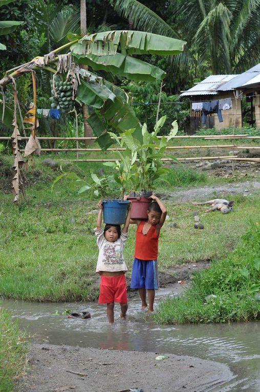 La déforestation concerne aussi les Philippines