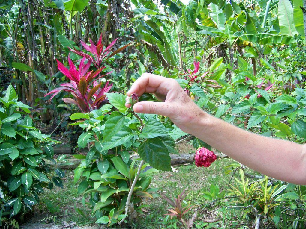 Un grand Merci à Mayon, Georges et Andy. Photos défilantes compte tenu du nombre : la 1 après la cascade