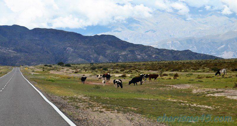 Sur la route de Cafayate