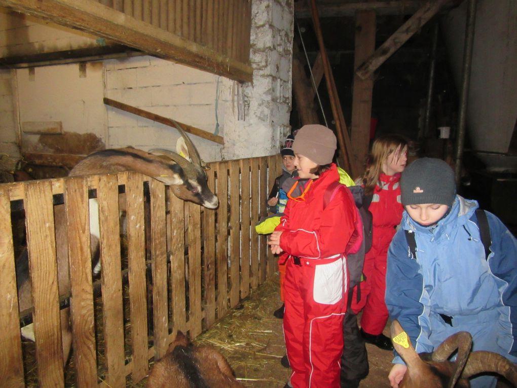 Une partie des photos de la ferme