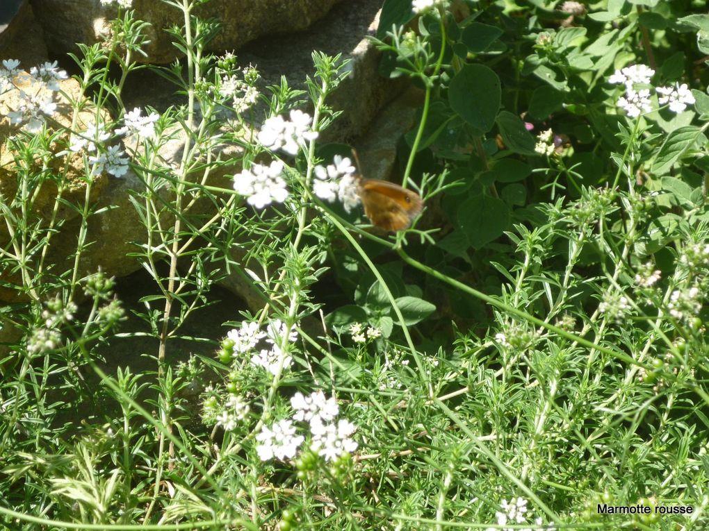 Jardin au naturel (4)
