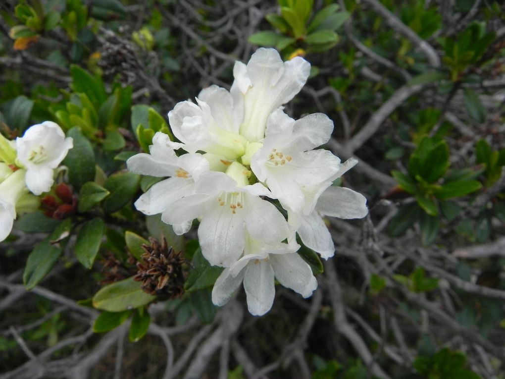 Bouquet fleuri du Capcir.