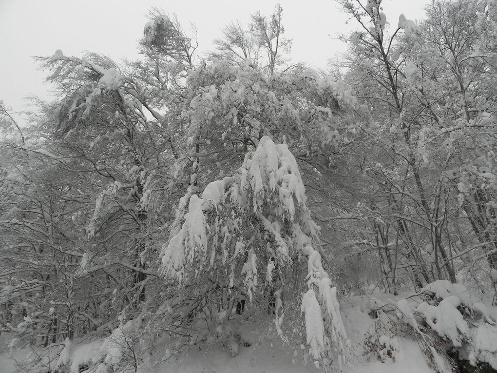Quelques vues...de l'hiver.