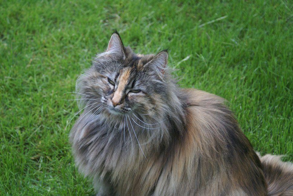 Trois chattes dans un jardin, diaporama