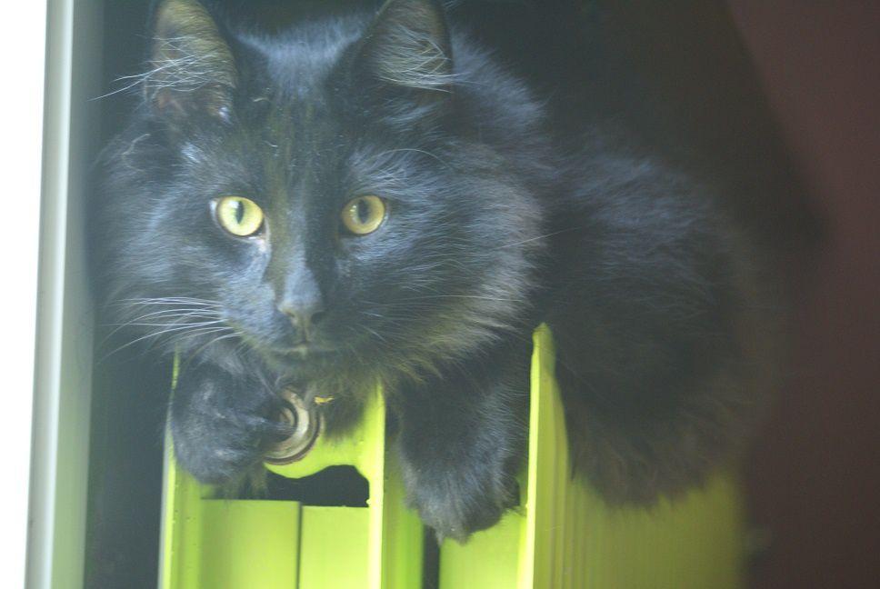 Le petit chat noir a bien grandi + Chouchou rentre de virée