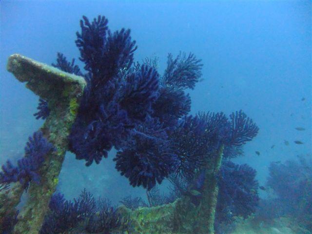 Sortie à la Seyne sur Mer